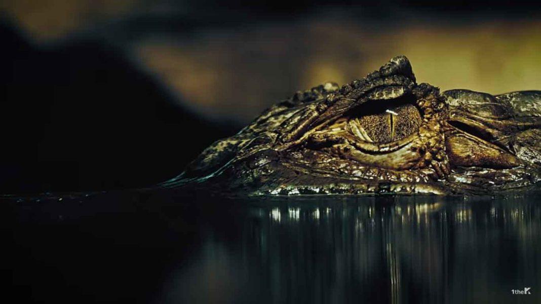 MONSTA X ворвались в серые будни с новым клипом к песне «Alligator»